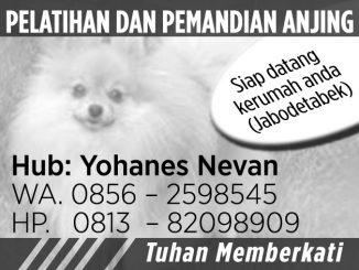 Iklan Jasa Pelatih Anjing